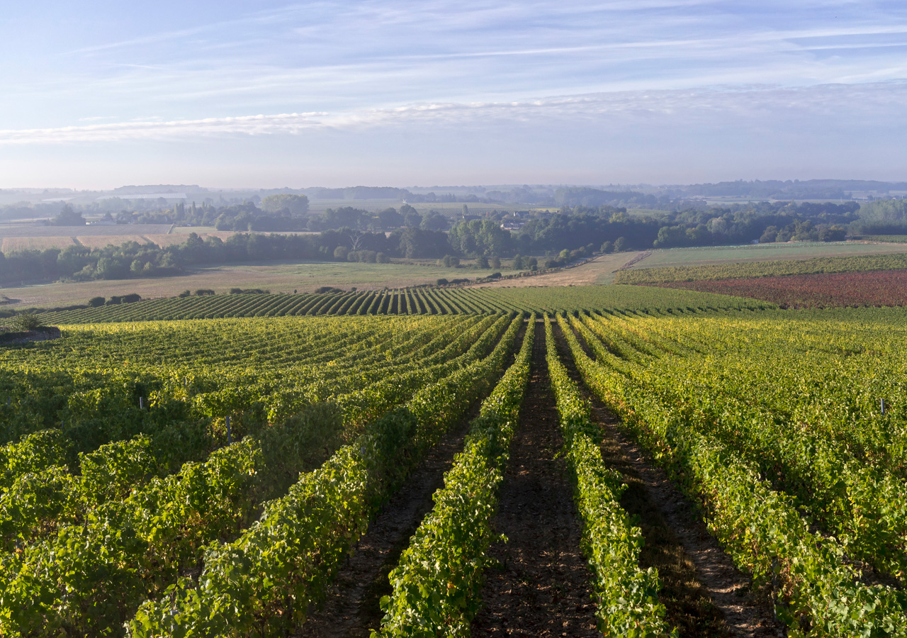terroir-vins-loire